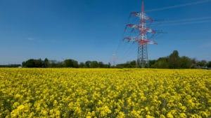 Ein Rapsfeld mit großen Strommasten.