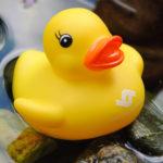 gelbe Ente am See